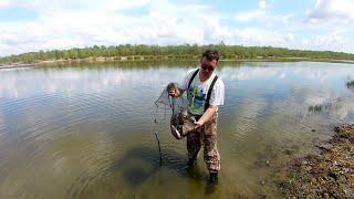 Отличный клев карася Хорошая погода Помощники помогают ловить рыбу