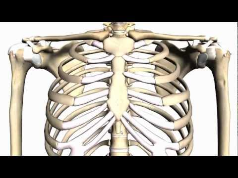 General Skeleton Basic Tutorial - Anatomy Tutorial