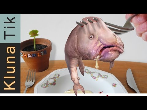 BLOBFISH!!       |     KLUNATIK COMPILATION ASMR Eating Sounds No Talk Psychrolutes Marcidus