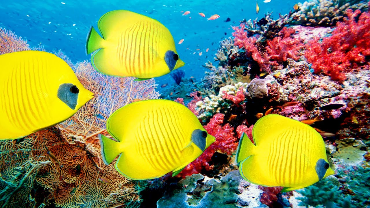 Image result for Reef Life of the Andaman (full marine biology documentary) Images
