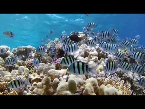 Diving in sharm el sheikh Egypt - 2013 Gopro and dive housing