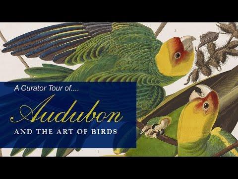 Curator Tour of Audubon and the Art of Birds