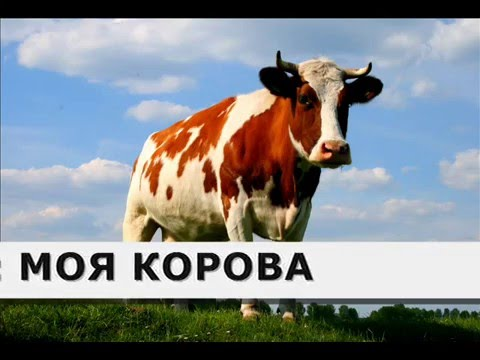 фото картинки корова