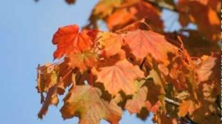 """Vivaldi - """"Autumn"""" II. Adagio molto, Piano version with autumn pictures"""