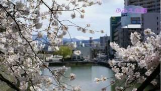 今年も福井の春祭りを撮りました。 今回のお市役は女優の大地真央さん、...
