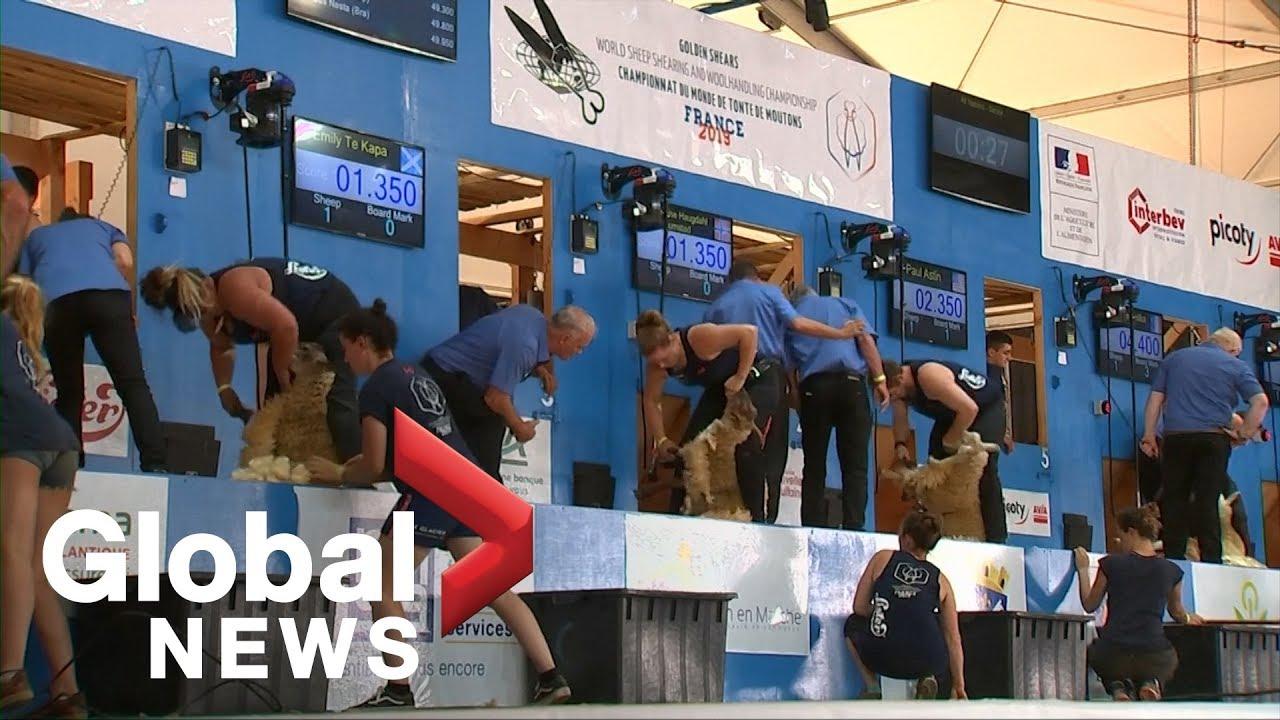 Sheep shearing is a real sport, athletes say