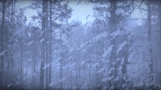 Gambar cover ARCTIC BLIZZARD | Storm White Noise For Relaxation & Sleep | 10 Hours - NO ADS