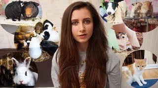 How I Got Each Of My Pets | STORYTIME