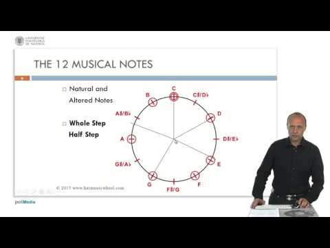 The 12 Musical Notes