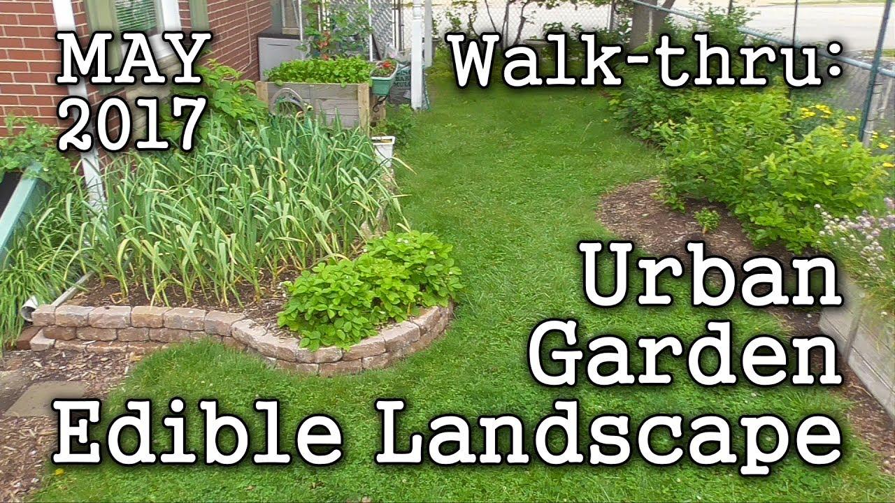 2017 may urban garden edible landscaping albopepper memorial