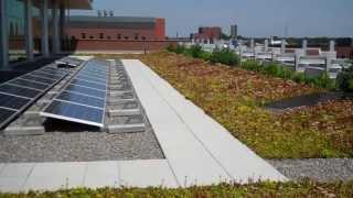 Mini Tour Of A Green Roof / Butterfly Garden