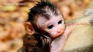 Need milk urgent,Newborn monkey need milk urgent,Newborn very hungry he lip his hand instead of milk