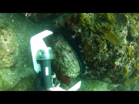 freediving-for-abalone,-albion-cove,-ca