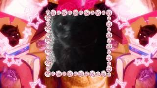 CATS! Thumbnail