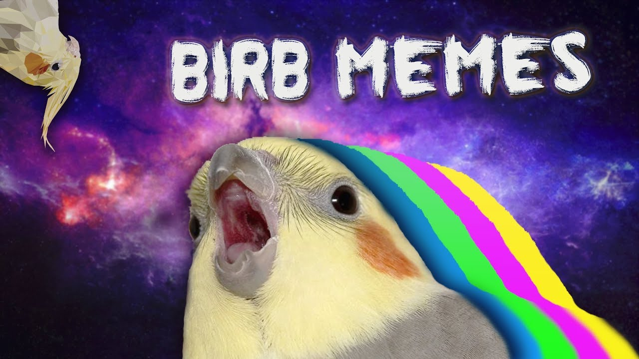 maxresdefault 10 min of dank birb memes youtube