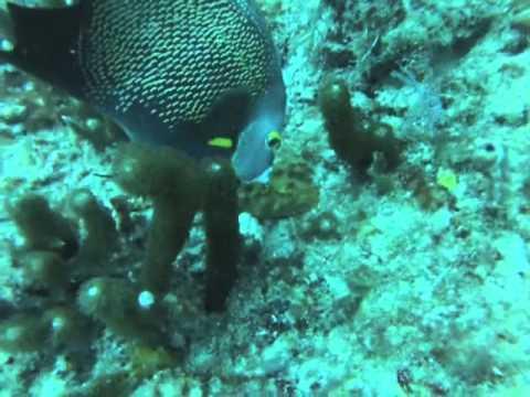 Scuba Trip Pompano Beach FL