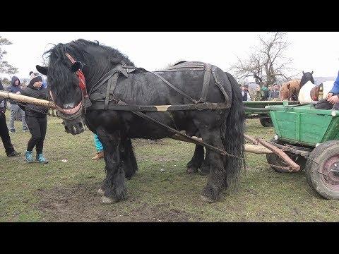Targul de cai de la Homorod, Brasov - partea a II-a - 15 martie 2018