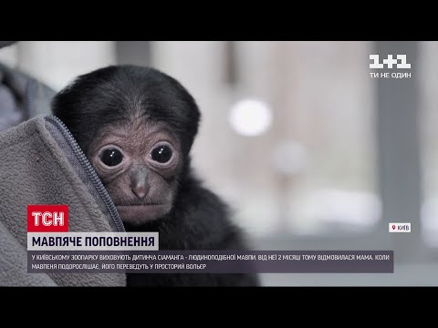 У київському зоопарку