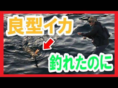 【エギング】良型アオリイカが釣れたのにタモがない