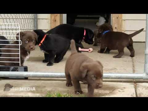 Home - Marshfield Area Pet Shelter