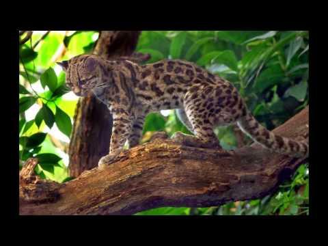Животные влажных экваториальных лесов фото, картинки