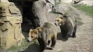 Lots of activity at the Henry Vilas Zoo