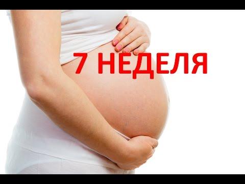 7 седьмая неделя беременности