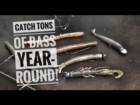 Top 4 rigs for catching numbers of bass year-round!