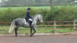 British Dressage Introductory B