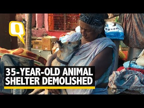 35-years-old Dog Shelter Demolished in Delhi; Caretaker Stays Put | The Quint