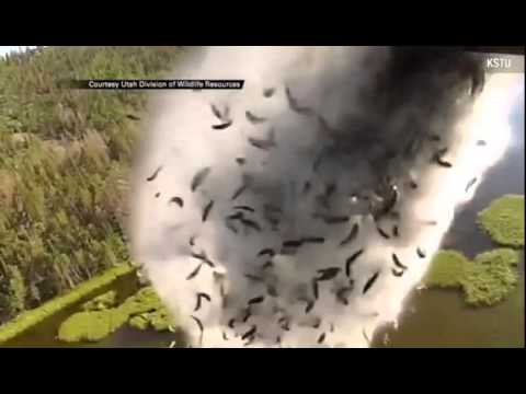 Plane Drops Hundreds Of Fish Into Lake