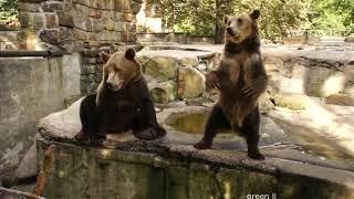Смешные Приколы про Животных - Смотреть Приколы про Животных89