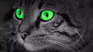 CATS – Protect You And Your Home From Ghosts And Negative Spirits