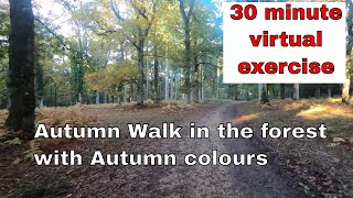 Virtual Autumn Walk - 30 minutes walking in the forest with the Autumn leaves