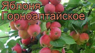 видео Яблоня Боровинка