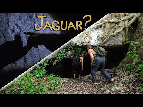 Are those jaguar tracks in this cave?