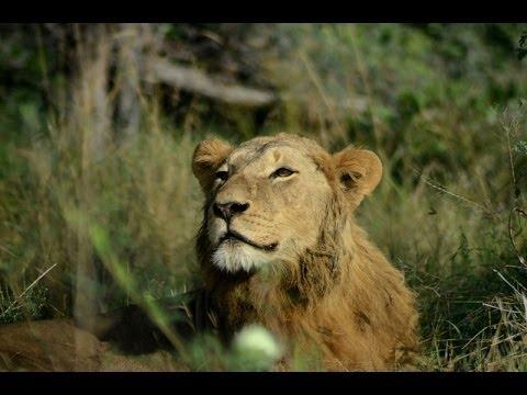 Botswana Safari HD