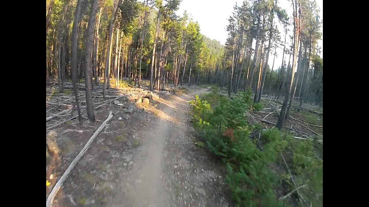 Downhill Mtn Biking Willow Creek Trail 105 In Red Lodge