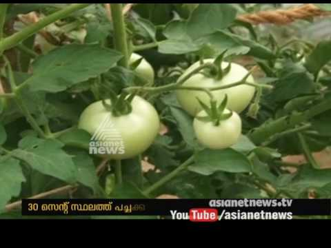 Vaikom west government school students success  farming in School compound