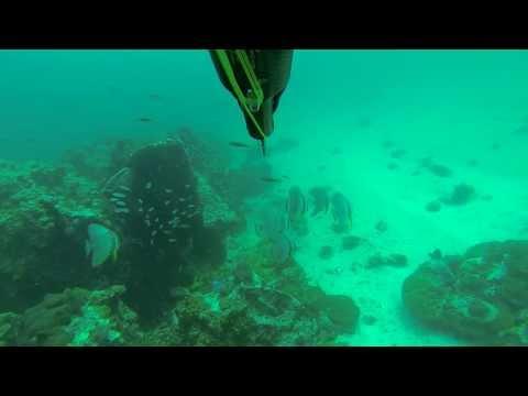 Spearfishing in Thailand Spanish Mackerel part 3. Подводная охота в Таиланде на Макрель  часть 3