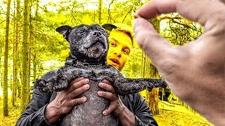 НЕОБЫЧНАЯ ФИНЛЯНДИЯ #4 | BASKETBALL DOG ИЛИ КАК ПРОВЕСТИ ВРЕМЯ В ФИНЛЯНДИИ