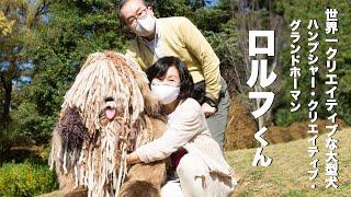 ロバート秋山のクリエイターズ・ファイル 「世界一クリエイティブな大型犬 ロルフくん」