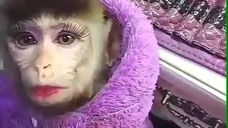 Emang Lagi Manja Versi monyet