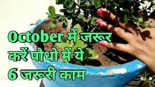 Gardening tips for October, what to do in garden in October,October में जरूर करें पौधो में 6 काम