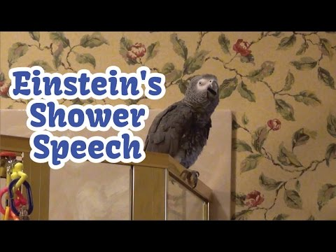 Einstein's Shower Speech - Talking, Singing, & Dancing!