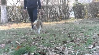 Lola A Beagle | Lola The Beagle!
