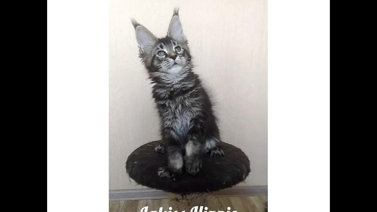 Огромный выбор домиков, лежанок и лежаков для кошек в интернет магазине «четыре лапы». У нас вы можете купить товары для кошек недорого и с доставкой.