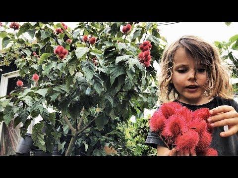 Backyard Garden Tour - AMAZING | Dragon Fruit - Pitaya ...