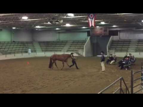 AQHA Rookie Amateur Showmanship Champion 2016 from YouTube · Duration:  1 minutes 12 seconds  · 593 views · uploaded on 08.05.2016 · uploaded by Poney Linda