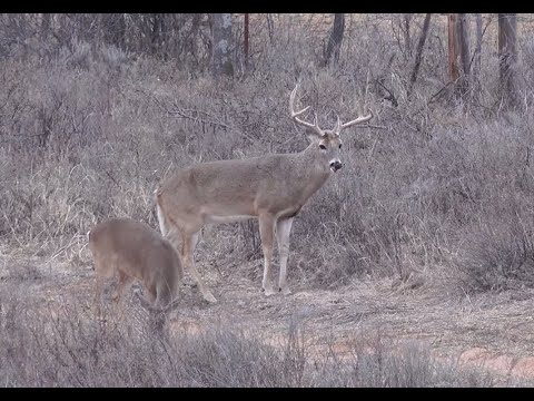 Hunting Texas Whitetails - Deer & Deer Hunting TV, Full Episode